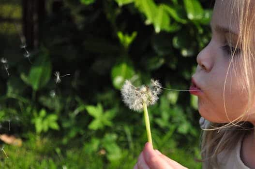 Photo of child blowing on a dandelion